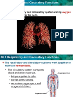 Biology-Ch 30 Notes on Respiratory and Circulatory Systems