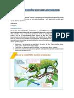 LA NUTRICIÓN EN LOS ANIMALES.docx
