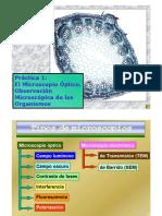 microscopia.docx
