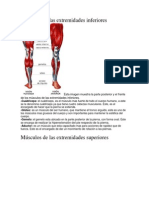 Musculos de Las Extremidades