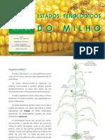 Estados Fenológicos do Milho