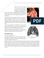 theory of lung