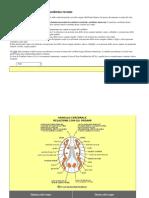 Tabella di consultazione mesoderma recente.docx