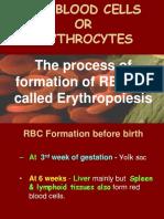 Erytropoiesis