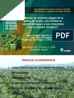 Cultivo Palma