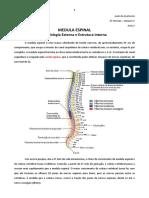 Aula 02 - Medula Espinal