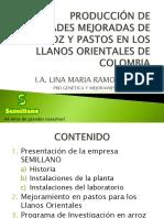 Produccion de variedades mejoradas de arroz y pastos