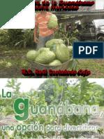 elcultivodelaguanbana-171106002931