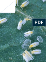 Effect of potassium fertilization and organic nutrient (Reef Amirich) in the population density of Bemisia tabaci (Genn.) and Thrips tabaci (L.) on cucumber