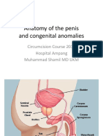 Anatomy of the penis.pptx