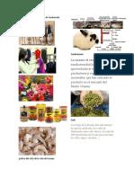 productos no tradicionales de Guatemala.docx