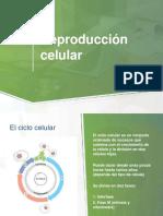 reproduccion celular.pdf