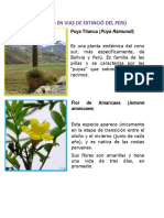 Plantas Angelina