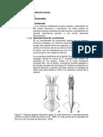 Sinopsis de Dosidiscus Gigas