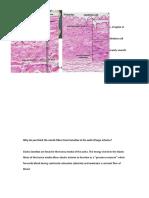 Histology of Artery