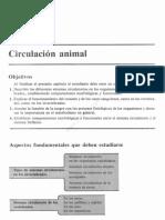 98669334-0CCAP-7-CIRCULACION-ANIMAL.pdf