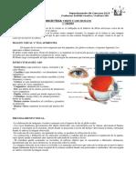 Receptor y Vision_el Ojo (1)