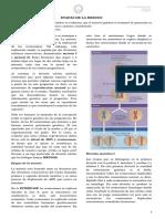 etapas de la meiosis.doc