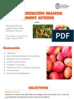 Conservación Mango Tommy Atkins.