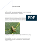 Enfermedades y Plagas de La Papaya en Cordoba