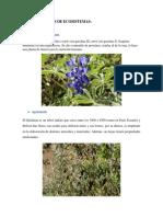 DELIMITACIONES DE ECOSISTEMAS.docx