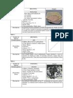 Lista de sulfuros 