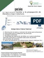 Propagacion de Mandioca bajo Cobertura.pdf