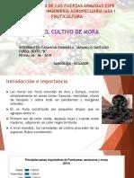 Casanova-Jaramillo Cultivo de Mora