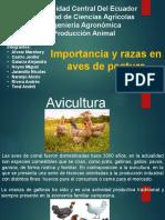 razas-de-gallinas-Produccion.pptx