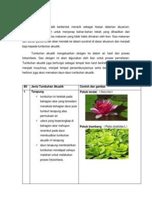 Tumbuhan Akuatik Dan Peringkat Ikan Docx