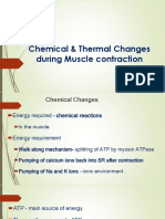 Chemical and thermal Changes during muscle contraction