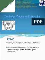 Pelvis Blanda