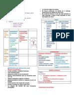 Resumen ANATOMIA DE Torax