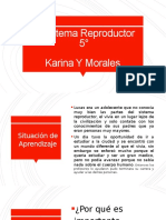 Sistema Reproductor 2