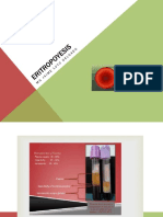 4.- ERITROPOYESIS-1