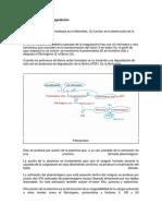 Fibrinólisis y Anticoagulación