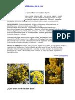 Propiedades de La Planta Helicriso o Sol de Oro
