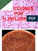 15. HAEMOPHILUS INFLUENZAE