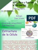 Célula estructura y función de sus partes.pptx