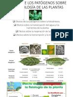 Clase_ Efectos Sobre Fisiologia de Plantas