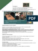 Ofidismo en Uruguay.docx