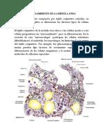 Microambiente de La Medula Osea