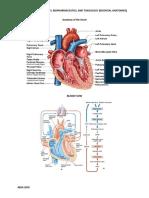 Essential Anatomies