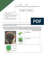 CIRCULACION PLANTAS