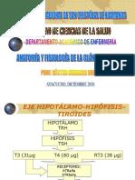 Anatomía y Fisiología de La Tiroides 2018