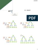 chromosome numbers.pdf