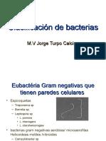 Clasificación-de-bacterias.ppt