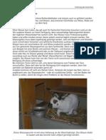 Fütterung_der_Kaninchen