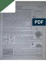 Sustitutorio 2019-I Seccion I