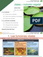Ppfuncionesvitales Nutricionvegetal 140322082522 Phpapp01